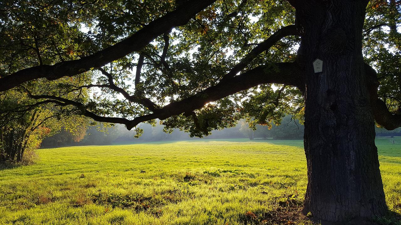 Parco Biblioteca degli alberi