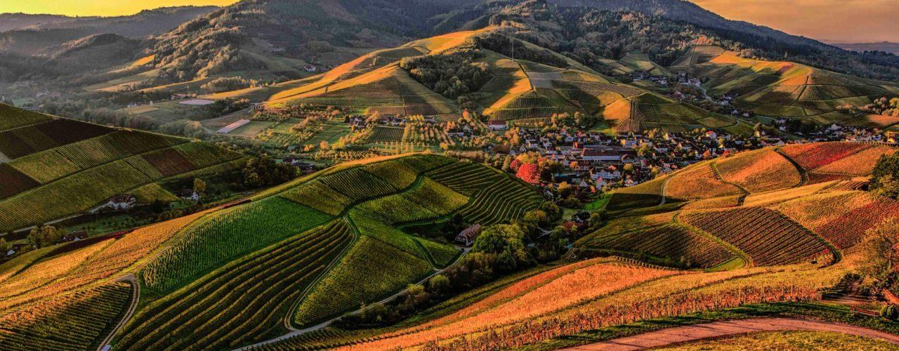 aziende agricole in emilia romagna