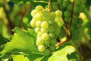 Tuscia del Vino
