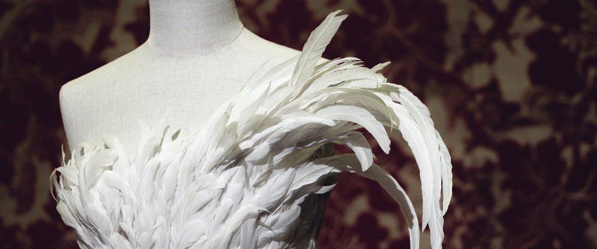 Animalia Fashion