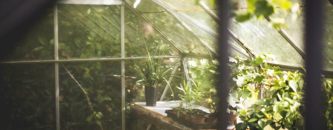 germinazione indoor