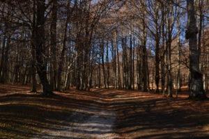 parchi e aree protette del Lazio