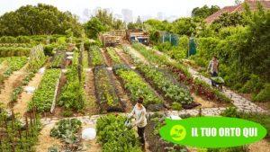 Come affittare un orto